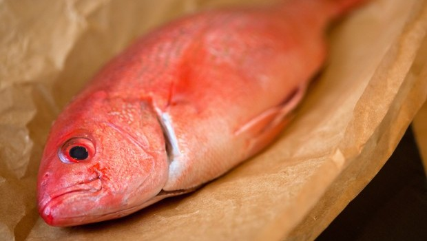 'There's Something Fishy Going On' — UL's Fish Fraud Scientists Aim to Find Out
