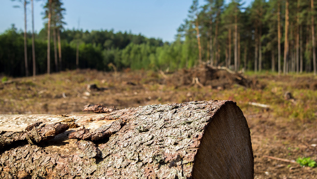 Four Reasons to Keep Focus on Deforestation in Supply Chains