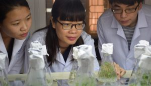 ASEAN-U.S. Science Prize scientists peer at plants being grown in glass cylinders