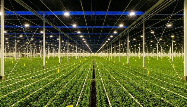 Evaluating the safety and performance of horticultural lighting and grow systems
